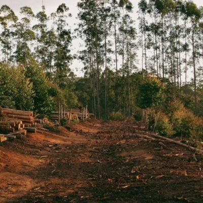 Deforestation A Human Evil