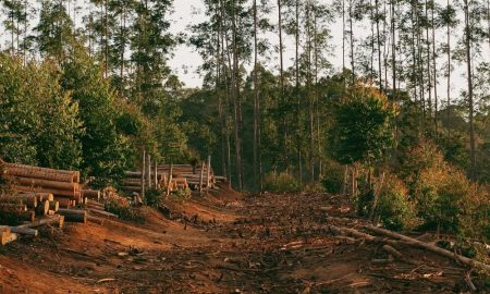 Deforestation A Human Evil