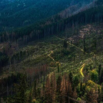 Deforestation Problems A Major Global Threat